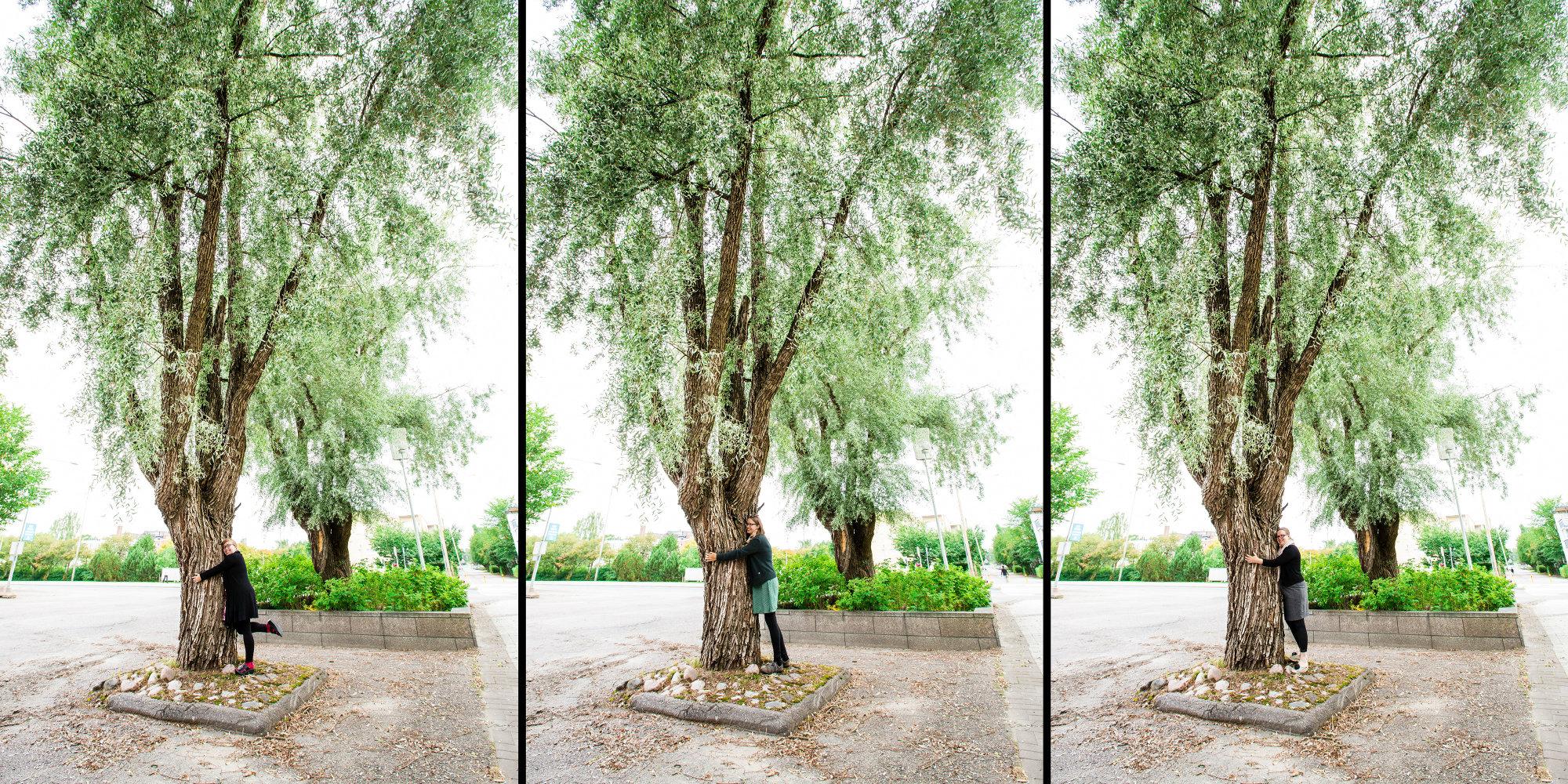 puunhalaus (1)_pienennetty